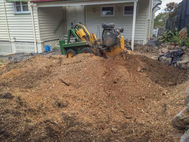 Camphor Laurel Tree Stump Mulch Price