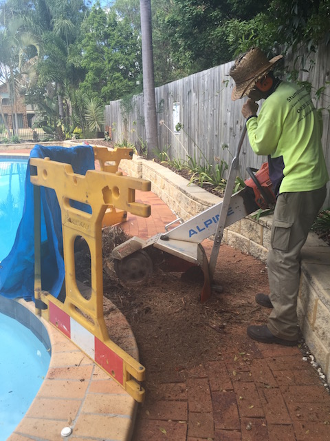Tree Stump Next To Pool In Ferny Grove
