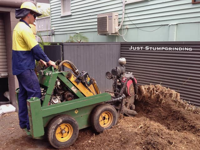 Bamboo removal using a tree stump grinder